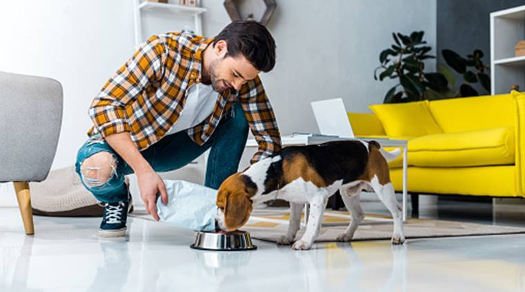 Tips on How to Take Care of Your Pet(s) Properly